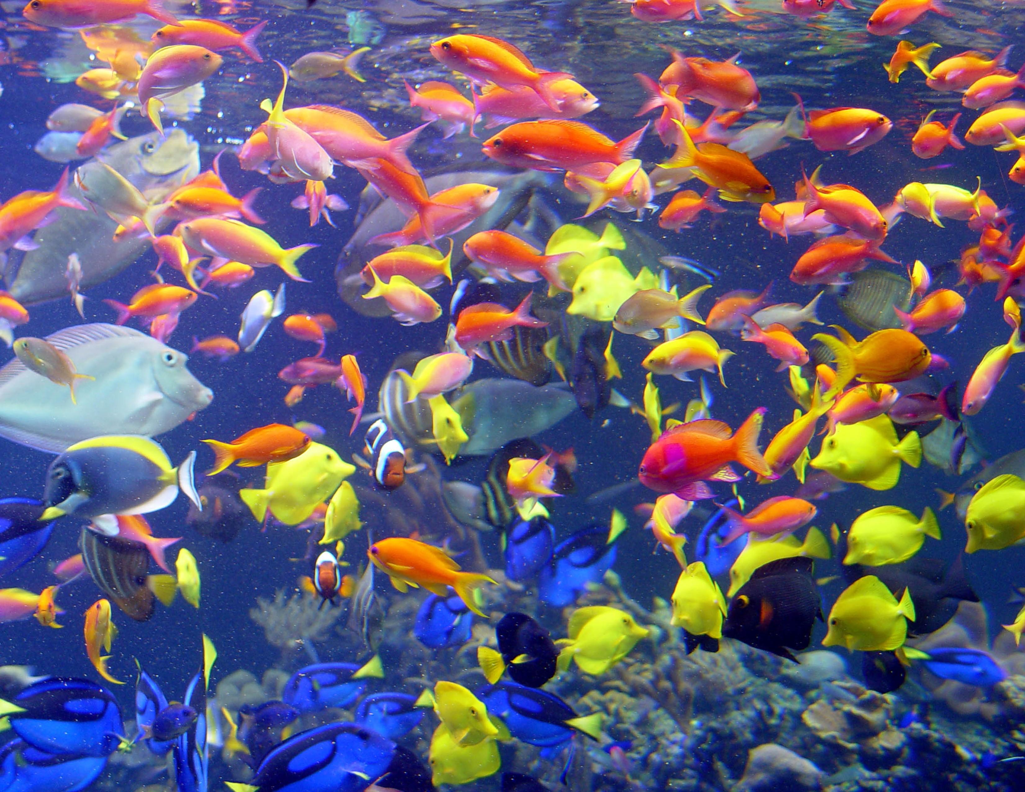 картинки стаи рыбок под водой тайну рассказали мне запись