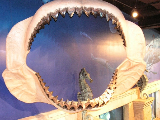 Megalodon Display