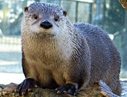 Otters at LI Aquarium & Exhibition Center