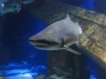 Shark at LI Aquarium & Exhibition Center