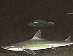 Sand Shark Lagoon at LI Aquarium & Exhibition Center