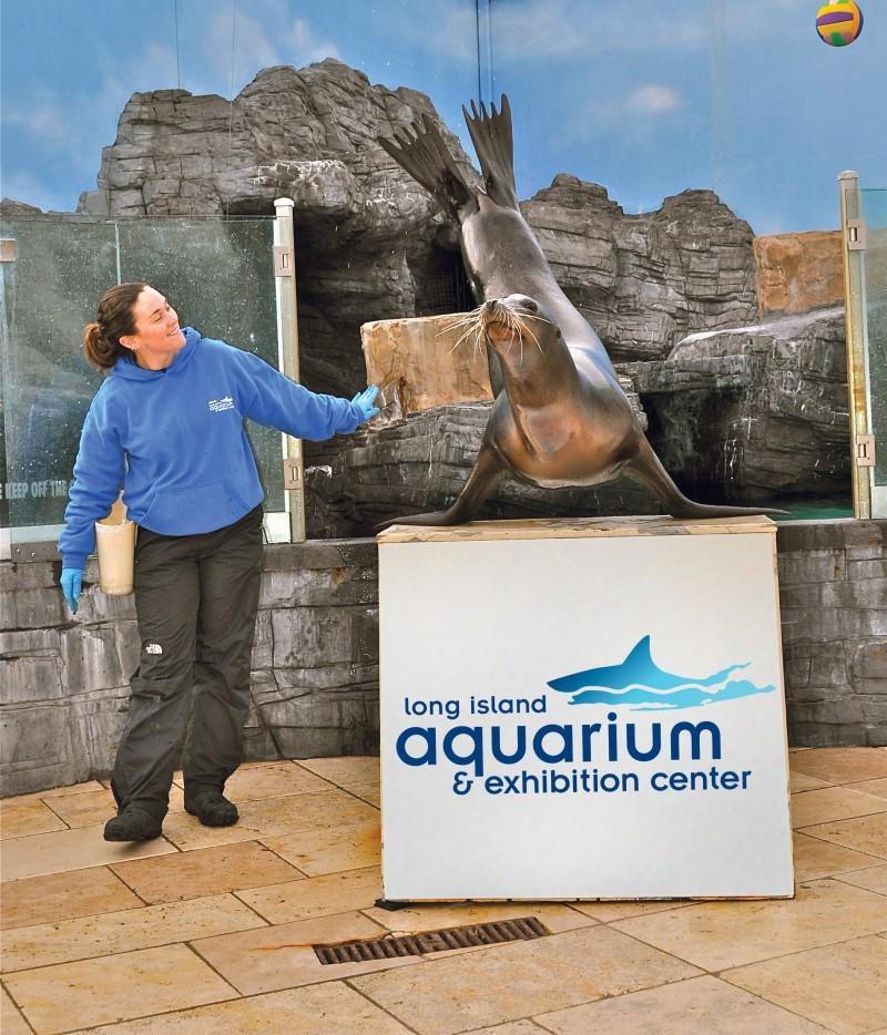 today 39 s events long island aquariumlong island aquarium. Black Bedroom Furniture Sets. Home Design Ideas