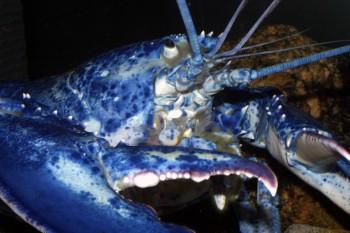Crab Villa
