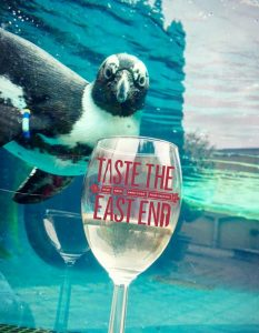 penguin with taste wine glass