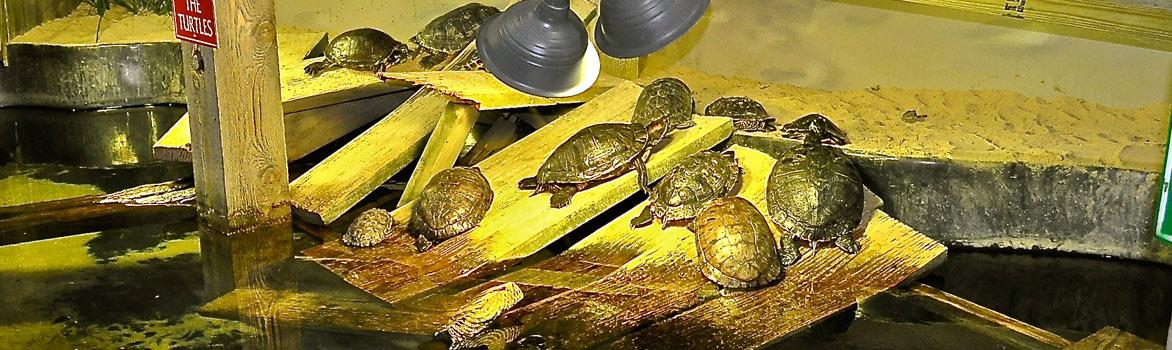Turtle Bay: Interactive Exhibit - Long Island AquariumLong